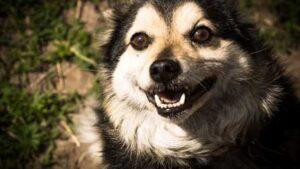 dog-366894_640